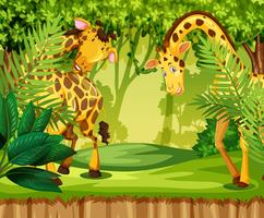 Girafa na selva