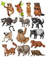Conjunto de muitos animais silvestres