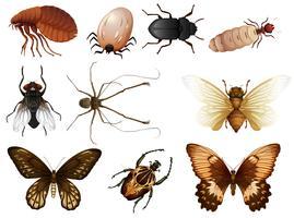 Conjunto de insetos e insetos vetor