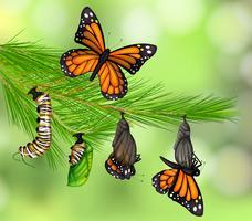 Um conjunto de ciclo de vida da borboleta
