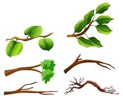 Conjunto de ramos com folhas vetor