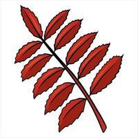 folha de outono esculpida. natureza folhas brilhantes das árvores. estilo de desenho animado. vetor