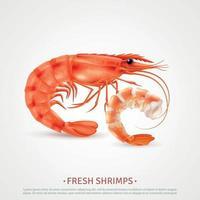 ilustração vetorial de publicidade realista de camarões de frutos do mar vetor