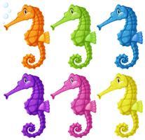 Cavalos marinhos em seis cores vetor