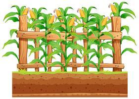 Uma fazenda de milho no fundo whiote vetor