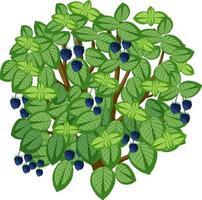árvore de amora-preta em estilo cartoon, isolada no fundo branco vetor