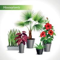 ilustração em vetor composição realista de plantas de casa