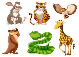 Conjunto de diferentes animais selvagens