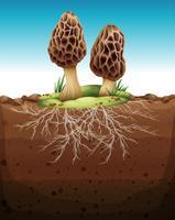 Cogumelo, crescendo, de, subterrâneo vetor