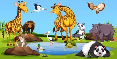 Animais selvagens juntos pela pequena piscina