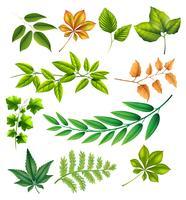 Folhas diferentes vetor