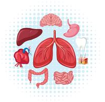 Órgãos humanos em cartaz vetor