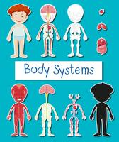 Cartaz de sistema menino e corpo