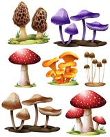 Conjunto de cogumelos diferentes vetor