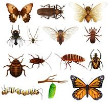Tipo diferente de insetos selvagens vetor