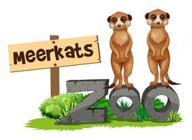 Dois, suricatos, por, a, jardim zoológico, sinal