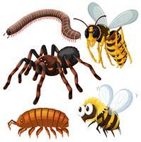 Tipo diferente de insetos perigosos vetor