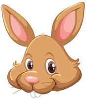 Cara de coelho em fundo branco vetor