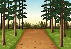 Cena de fundo com floresta de pinheiros vetor