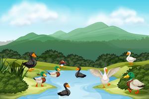 Patos na cena da lagoa vetor