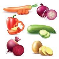 ilustração vetorial conjunto de peças realistas vegetais vetor