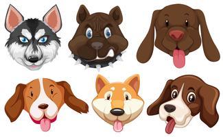 Conjunto de cabeça de raças de cães vetor