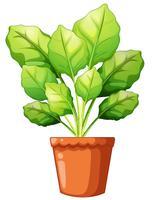 Verde, planta, argila, pote vetor