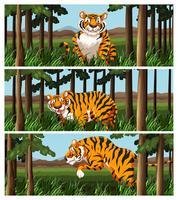 Tigre selvagem que vive na selva vetor