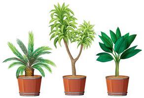 Um conjunto de plantas em pote vetor