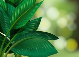 Folha verde em fundo natural vetor