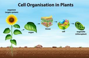 Organização celular em plantas vetor