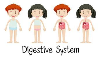 Menino menina, com, sistema digestivo vetor