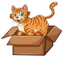 Um gato na caixa vetor