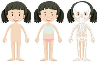 Menina e partes do corpo vetor