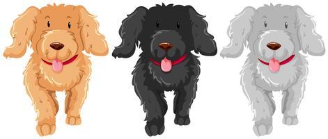 Três, poodle, cão, com, feliz, rosto vetor