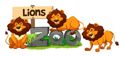 Três leões no zoológico vetor