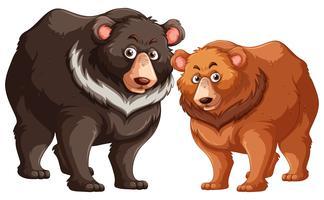 Ursos pretos e marrons vetor