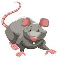 Rato cinzento vetor
