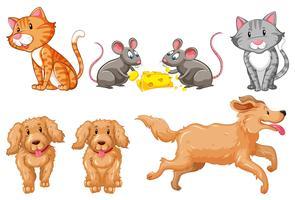 Conjunto de cães e gatos vetor