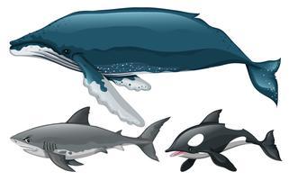 Tipo diferente de baleia e tubarão vetor