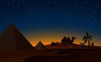Pirâmide e camelos na cena da noite do deserto vetor