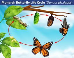 Ciclo de vida da borboleta monarca vetor