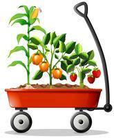 Legumes frescos e frutas no carrinho vetor
