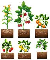 Diferentes tipos de plantas no jardim vetor