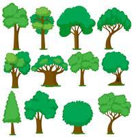 Conjunto de várias árvores vetor