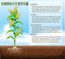 Árvore de milho e design de texto vetor