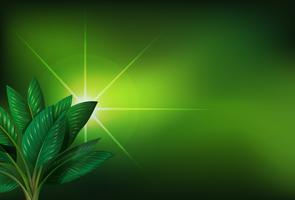 Um fundo verde com uma planta