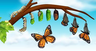 Um ciclo de vida da borboleta vetor