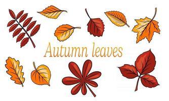 Outono folhas grande conjunto. folhas esculpidas abstratas. estilo dos desenhos animados. vetor
