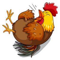 Galinha galinha rindo no chão